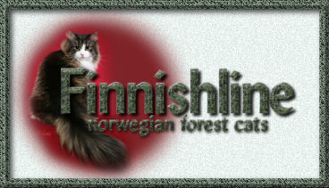 Finnishline Norwegian Forest Cats