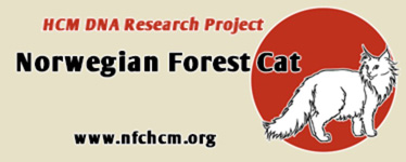 Norwegian Forest Cat HCM DNA Research Project