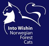 Into Wishin Norwegian Forest Cats