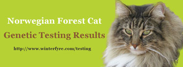 Norwegian Forest Cat Genetic Testing Results